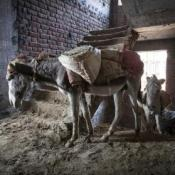 A donkey working on a construction site