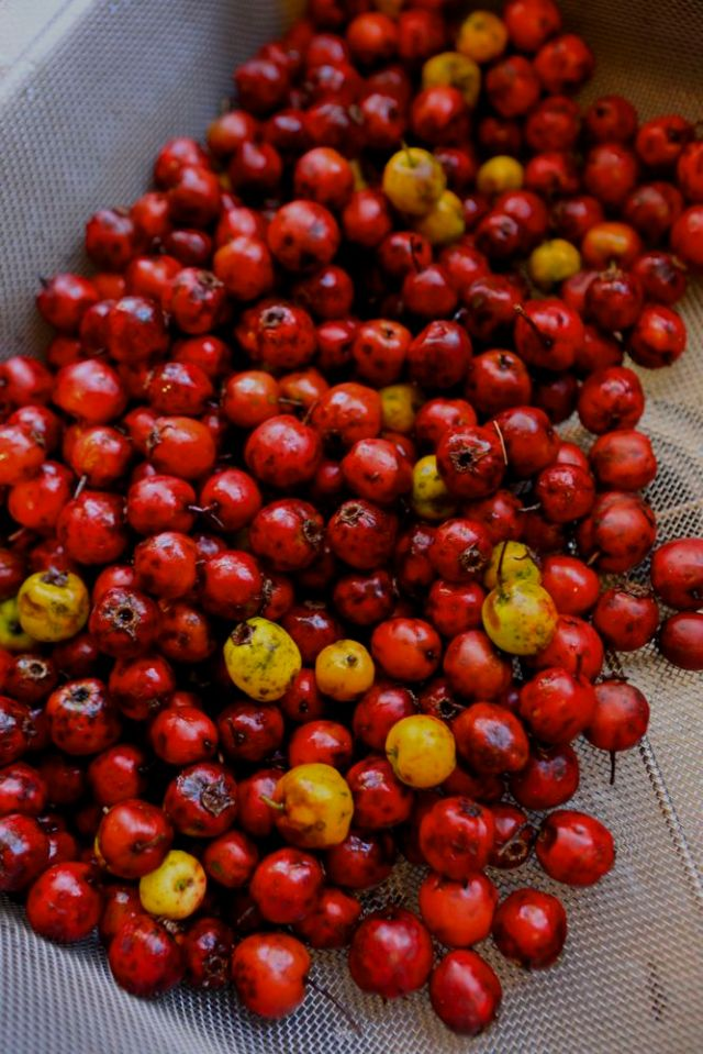 Hawthorn-fruit