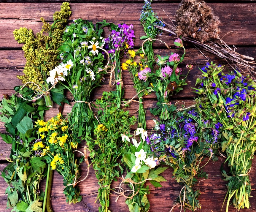 Wild Witchcraft Plants – Re-Stock Your WitchCabinet