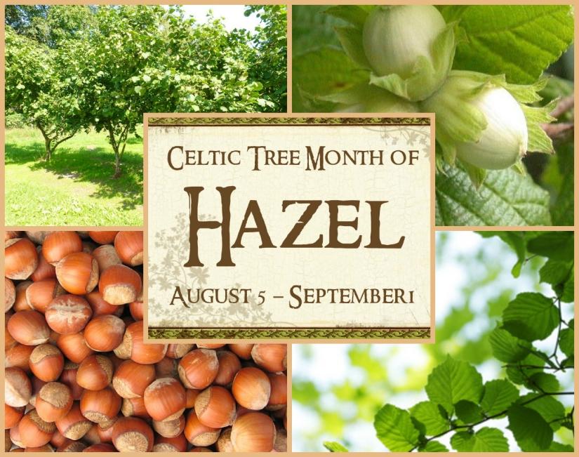 Hazel Tree: August 5 ~ September 1 {CelticAstrology}