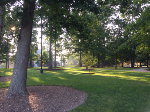 The Oak Grove in the Morning Light