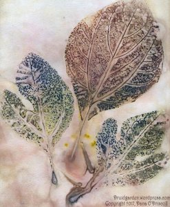 An ecoprint I made of the variety of sassafras leaves