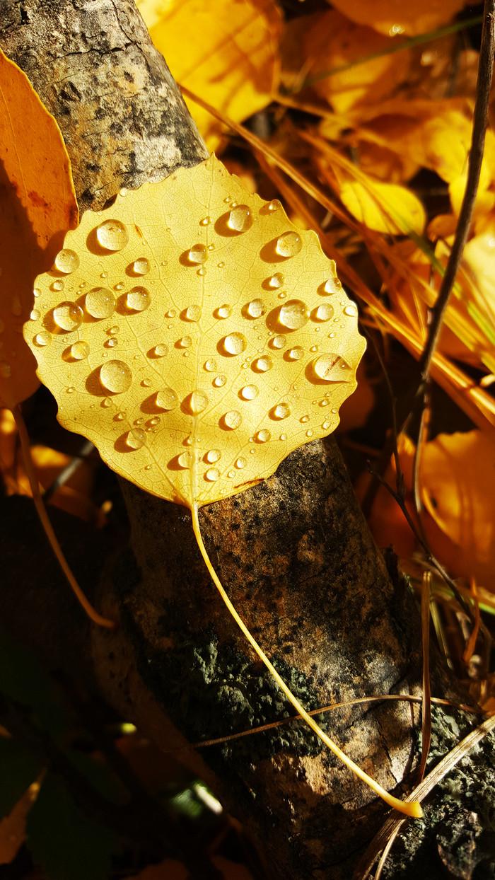 As Autumn Approaches…