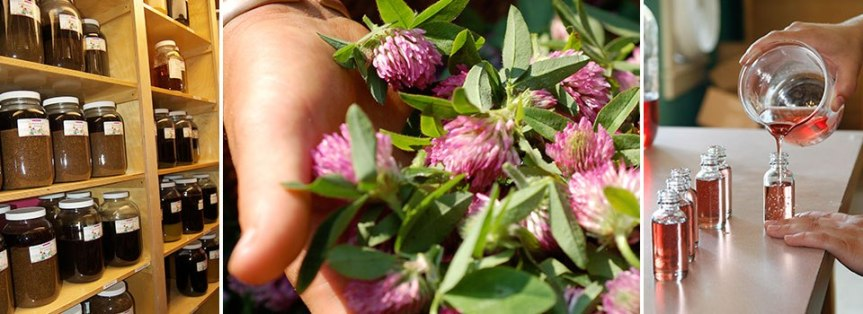 Herbs ~ Harvesting, Drying, Preserving and Storing YourHerbs.