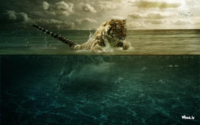 Tiger-Leap-In-The-Water-Wallpaper