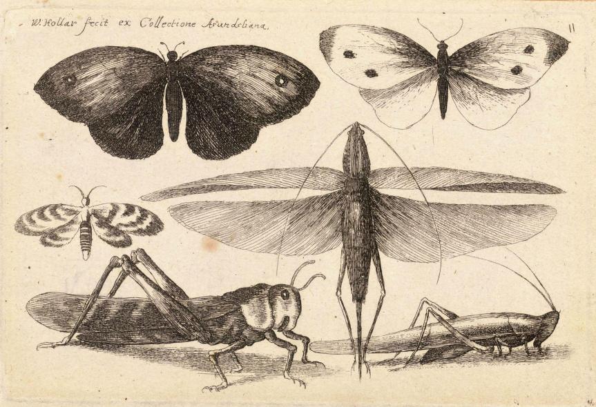 Ozark Encyclopedia – I – InsectMisc.