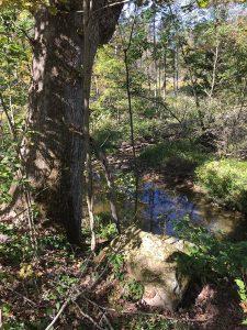 White Oak by the Creek