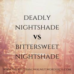 deadly nightshadevsbittersweet nightshade