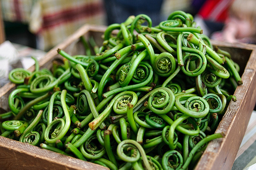 Foraging for Fiddleheads {Well, Sort Of}
