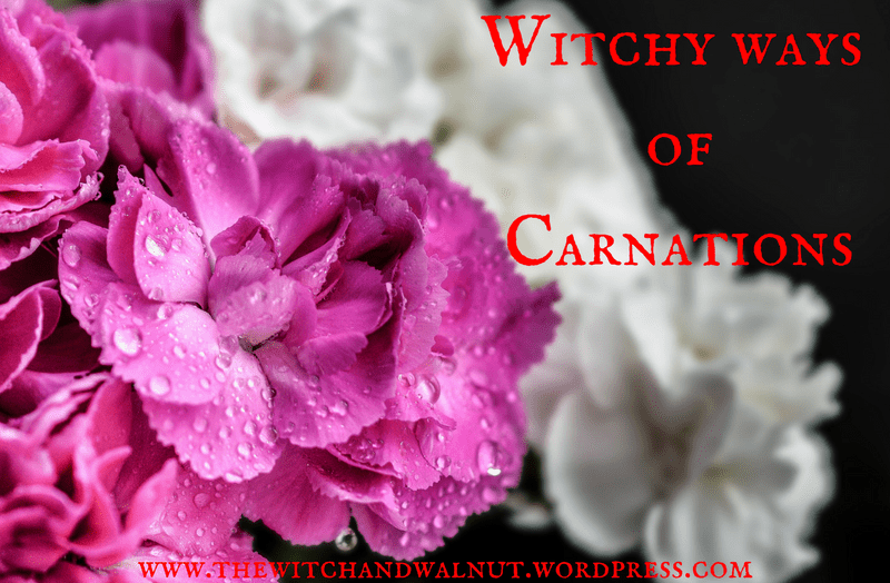 The Witchy Ways ofCarnations