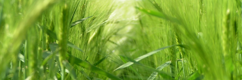 Health Benefits of BarleyWater