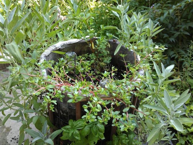 herb farm bucket
