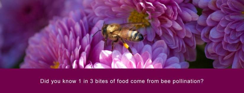 Honey Bees; Heros of OurPlanet
