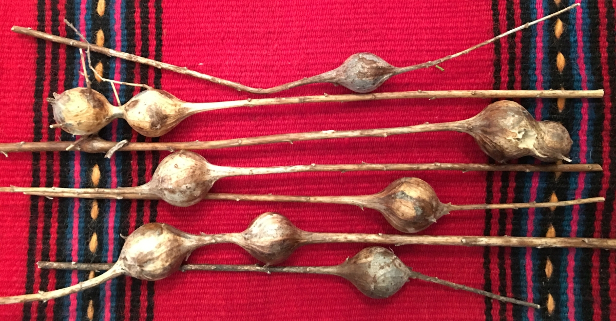 Witchcraft Charms, Talismans & Amulets with Goldenrod Galls