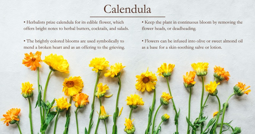 Your Apothecary Cabinet: Calendula Oil