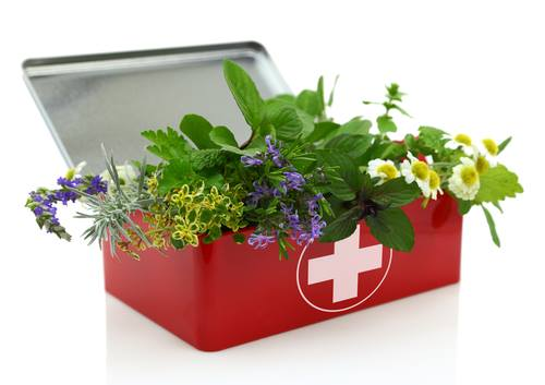 Your Apothecary Cabinet: Herbal First Aid Kit…