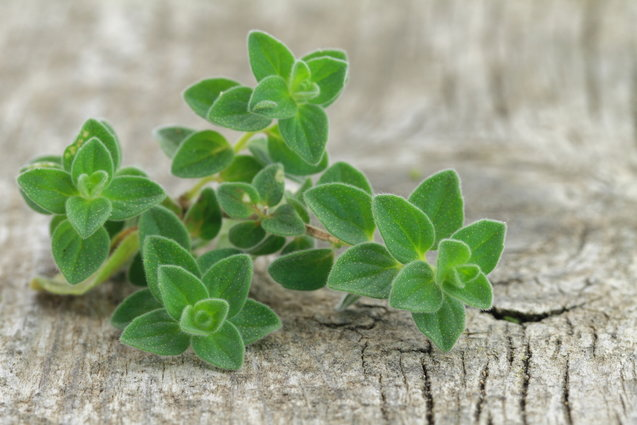 Herb Guide: Oregano