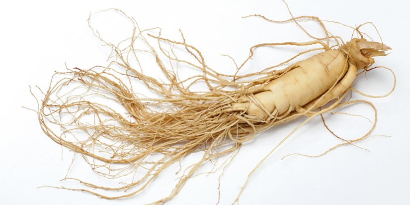 What Is Eleuthero Root?