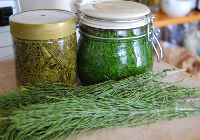 What Is Horsetail {Equisetum arvense}