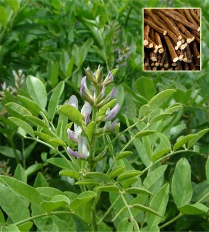 What Is Licorice Root?