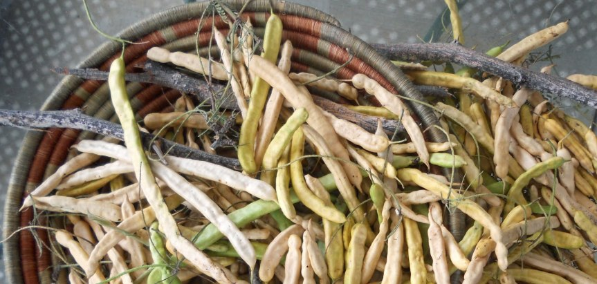 Southwest Gardening: Sacred Mesquite~Recipes