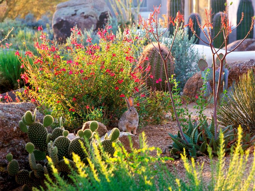 Tips For Growing and Preserving Herbs In The LowDesert