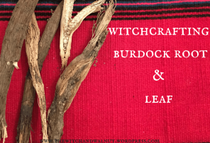 witchcrafting with burdock root & leaf