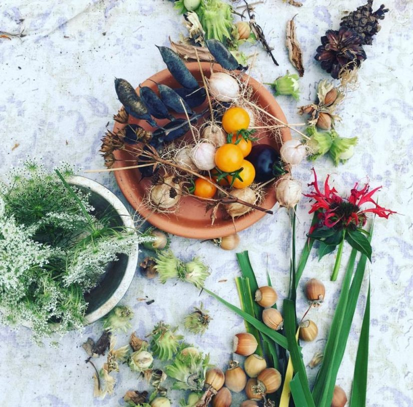 Native American Herbs of theNortheast