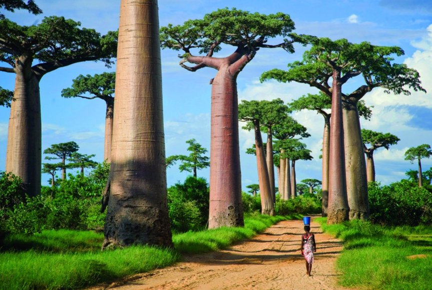 Geographical Variation in Nutritional Content of Baobab