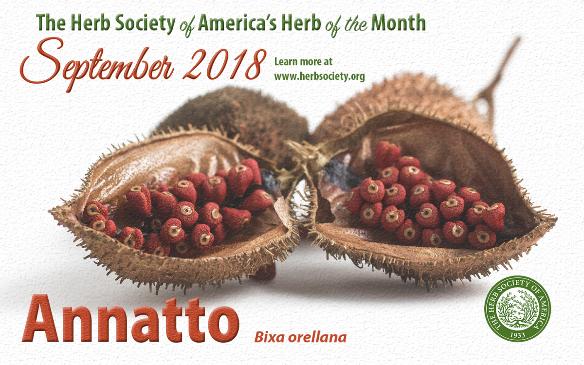 September Herb of the Month; Annatto