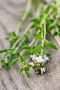 living-herbs-for-cold-flu-thyme