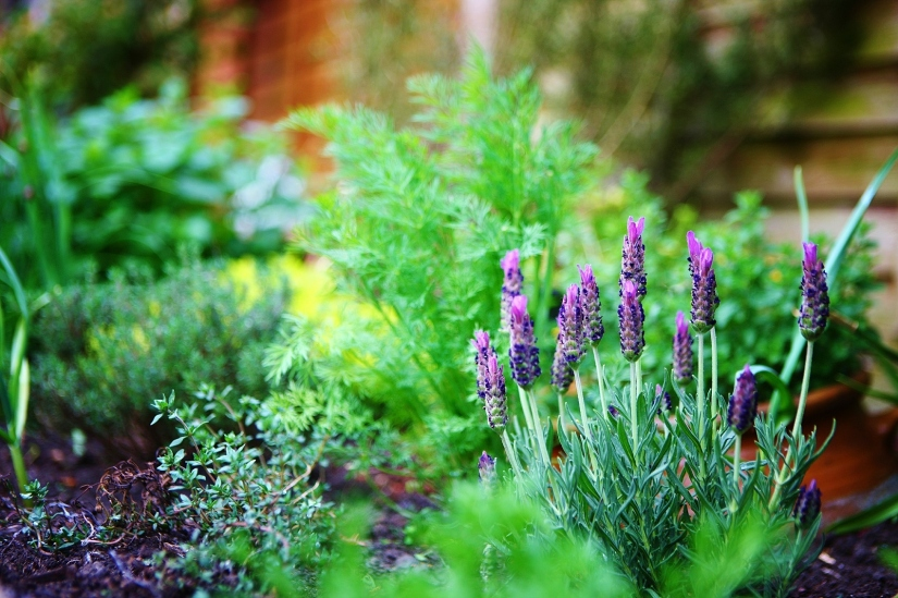 Already Thinking About Designing A HerbGarden?