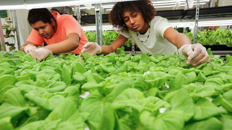 NYC's largest student-built hydroponic farm leading students and Bronx community to healthierfutures