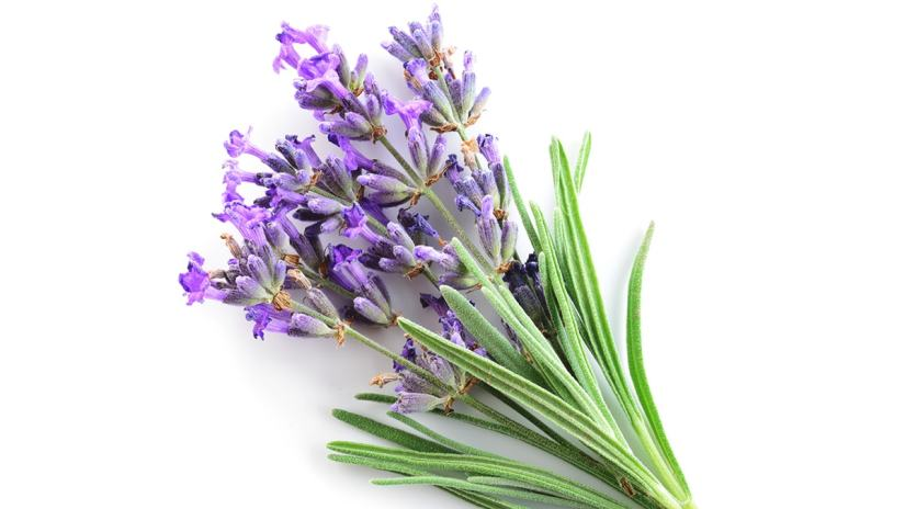 Lavender for Body and Soul
