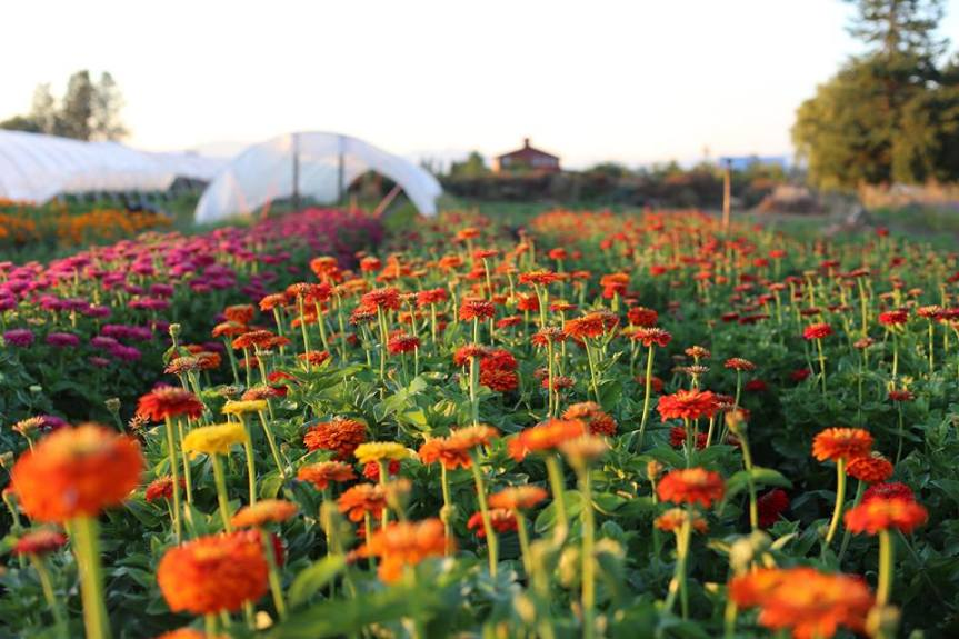 Thinking About Planting a DyeGarden?