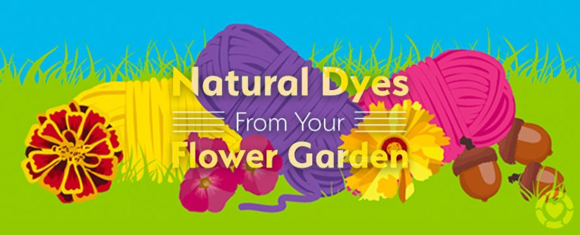 Natural Dyes from your Flower Garden [Infographic]
