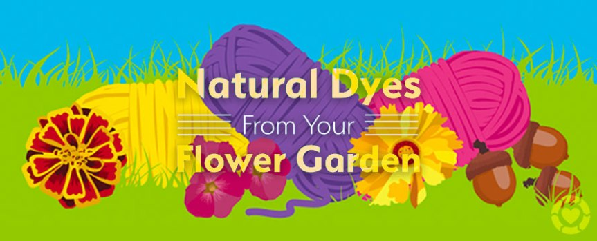 Natural Dyes from your Flower Garden[Infographic]