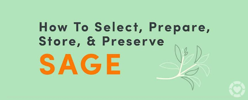 How to select, prepare, store and preserve Sage [Infographic]