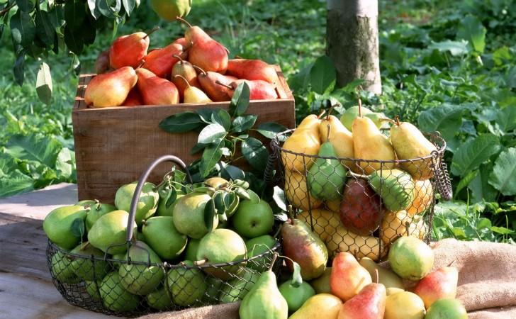 Food as Medicine: Pear (Pyrus communis and P. pyrifolia,Rosaceae)