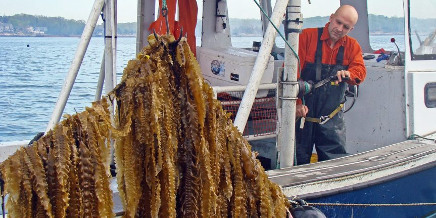 3D Ocean Farming helping to restore the oceans and provide sustainablefood