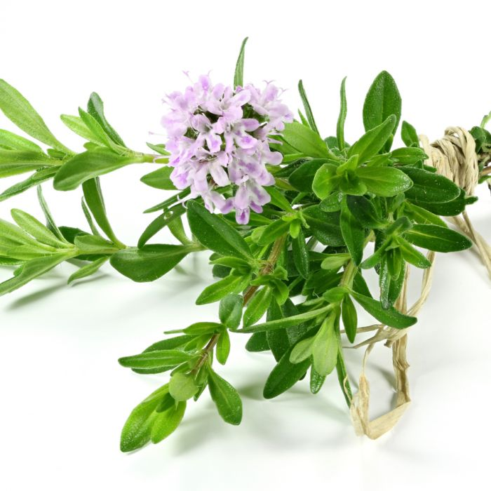 A Natural Antibiotic: Thyme Oil for Wellness and Cleaning