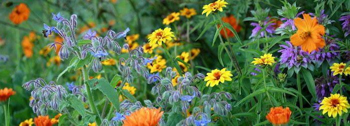 Growing Edible Flowers in YourGarden
