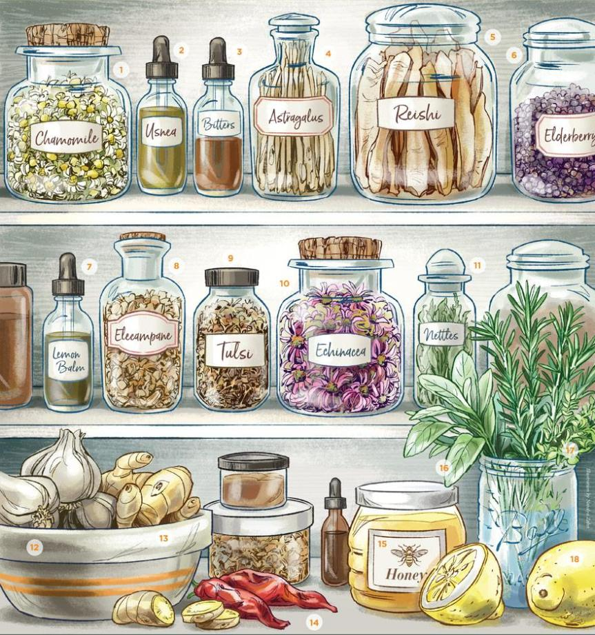 Herbal Medicine Cabinet – Urban Moonshine