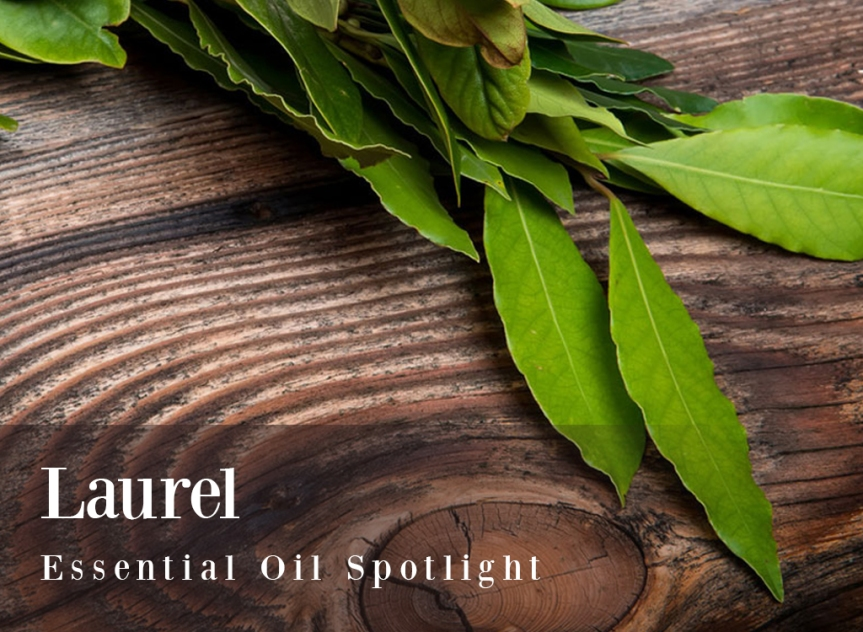 Benefits of Laurel Essential Oil