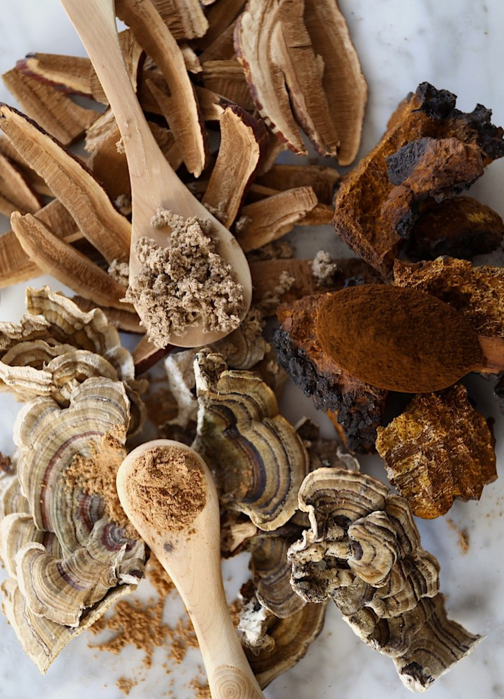 The Mushroom Course Giveaway – Herbal Academy
