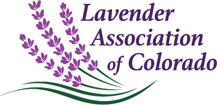 It's A Lavender Season! Lavender Association of Colorado