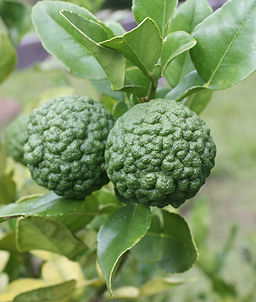 thai lime fruit