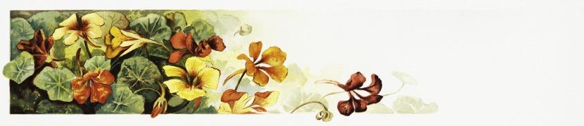 flowers-5792157_1920_Image by Prawny via Pixabay