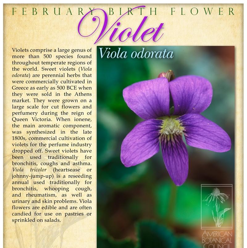 Magickal Properties and Uses of Viola, VioletMagic