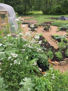 One of our amazing sacred gardens here at the Druid's Garden Homestead!